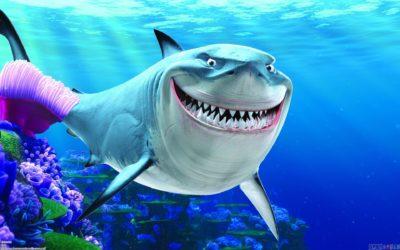 Акция «Акула» в Южно-Сахалинске